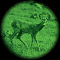 green-night-vision-1.jpg